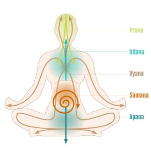 5-Prana-Vayus